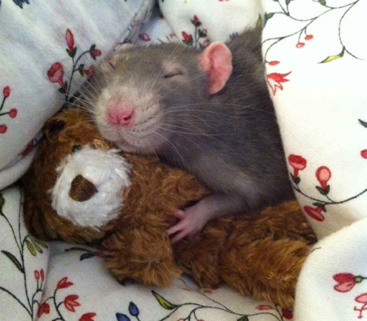Are Rats Good Pets?