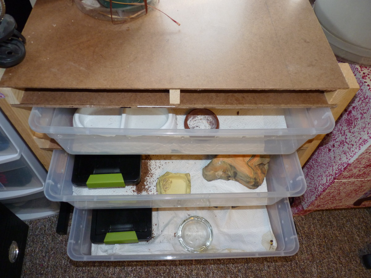 Three drawers for the adult geckos.