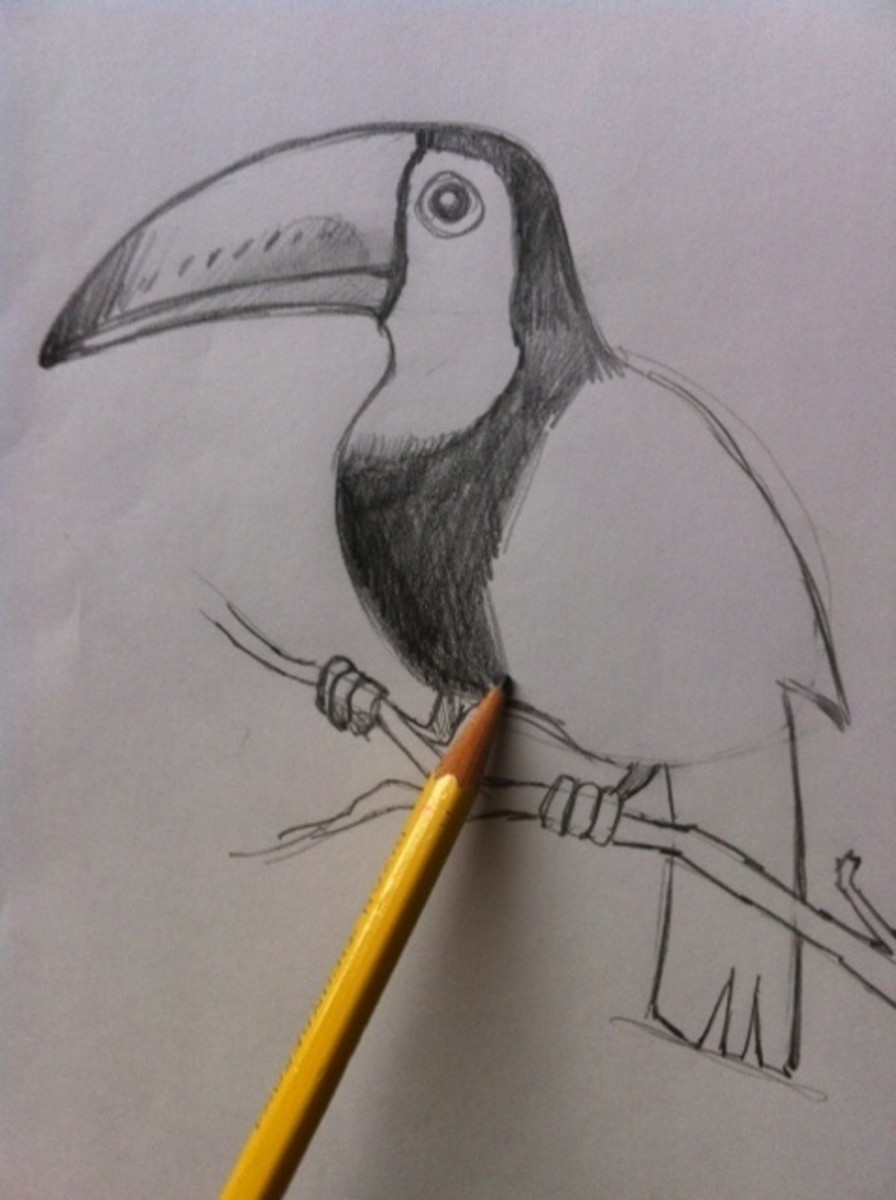 how-to-draw-a-tropical-bird