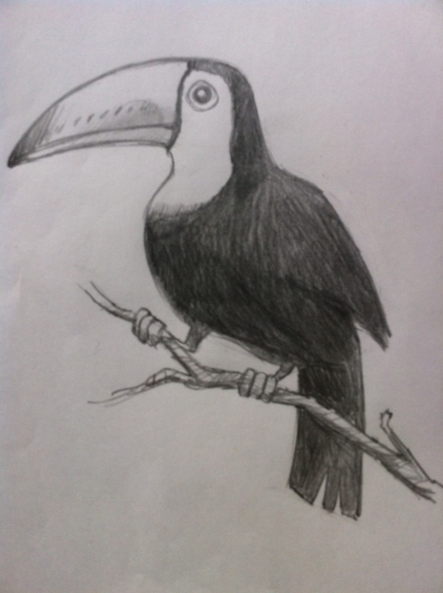 How to Draw a Tropical Bird