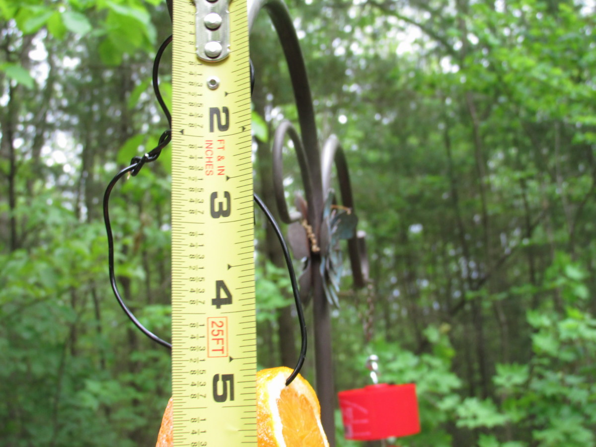 "Fruit Feeder should be no more than 5"" long so that birds will feel safe landing and feeding from it."