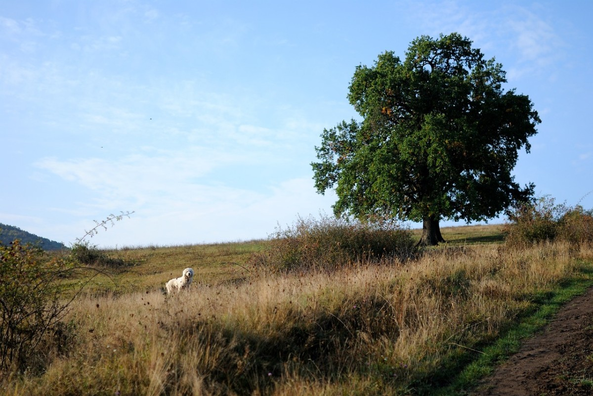 Dog and tree