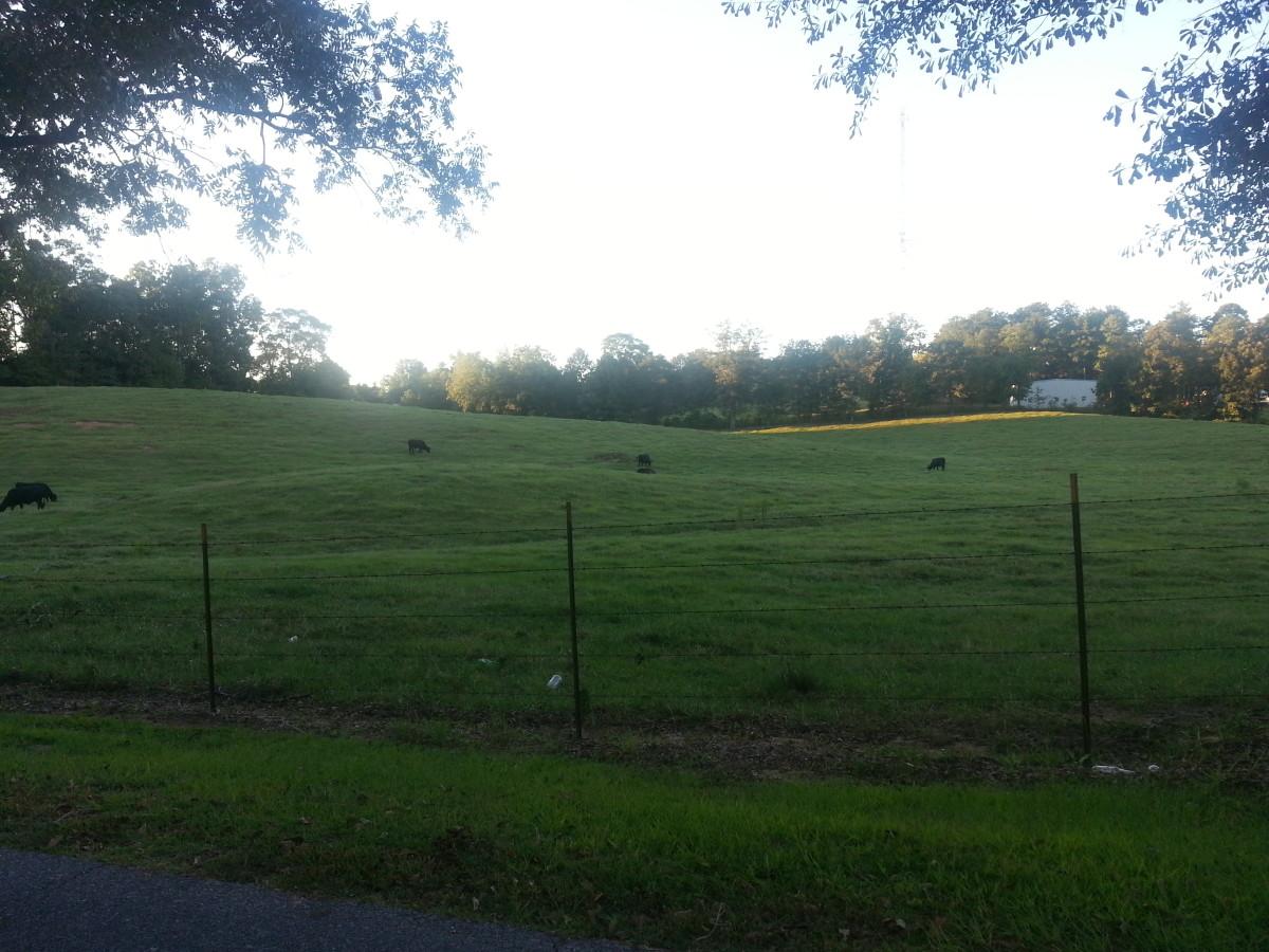 Rolling verdant pastures