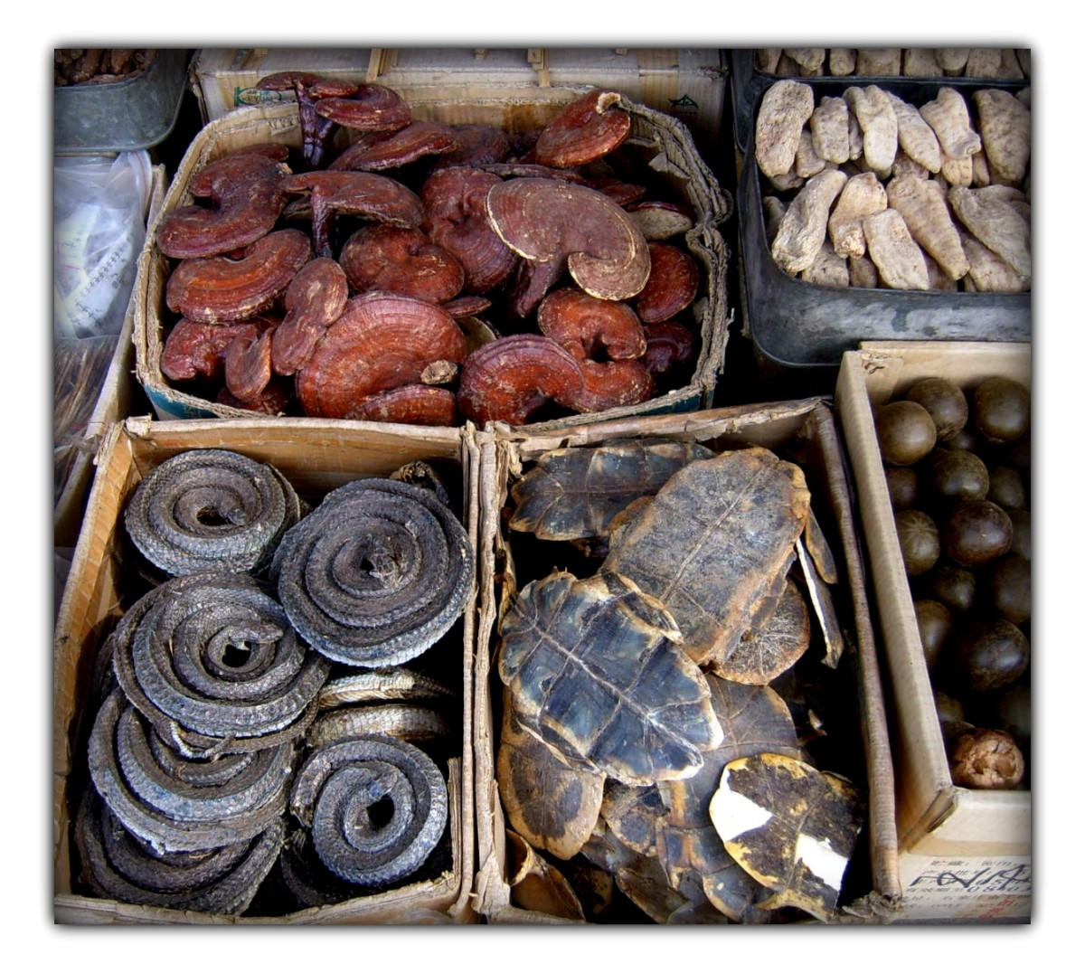 "Traditional Chinese medicine in Xi'an market, clockwise from top left corner: dried Lingzhi (lit. ""spirit mushrooms""), ginseng, Luo Han Guo, turtle shell underbelly (plastron), and dried curled snakes."