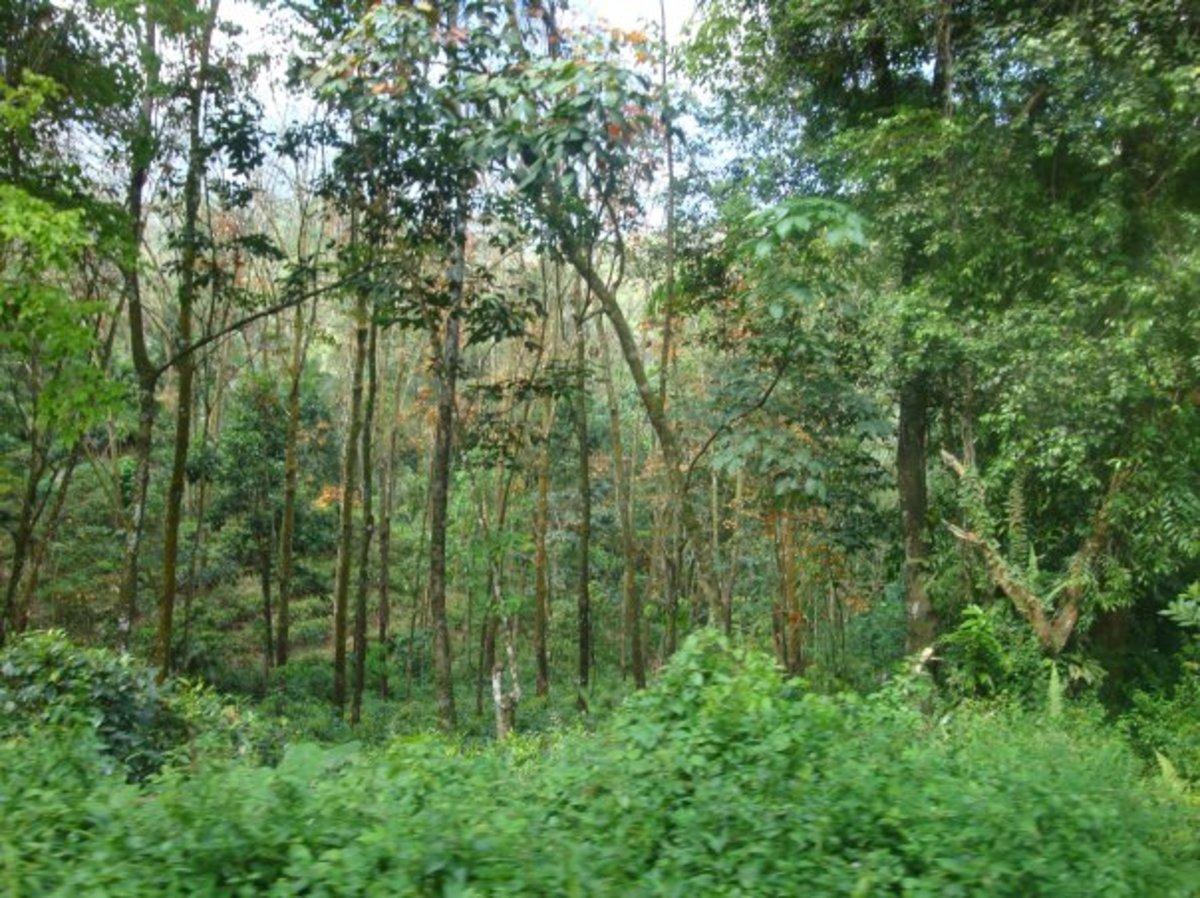 Beautiful path leading to Gods Paradise nature resort