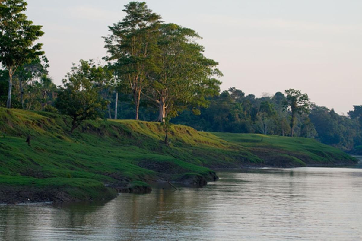 Amazon River bank in, Peru.