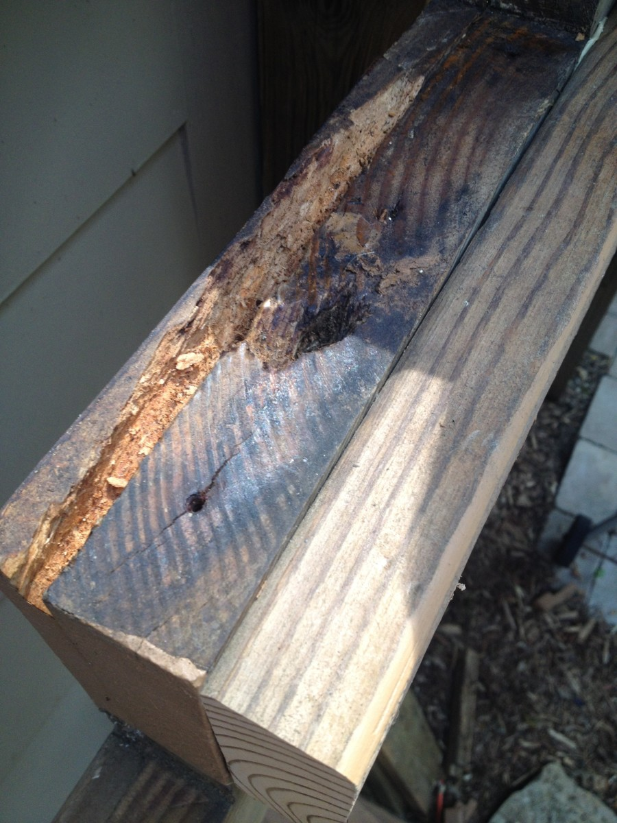 Another image of a partially rotted stringer and adjacent skirt board. Luckily, there was enough solid wood remaining to fill and attach additional support.