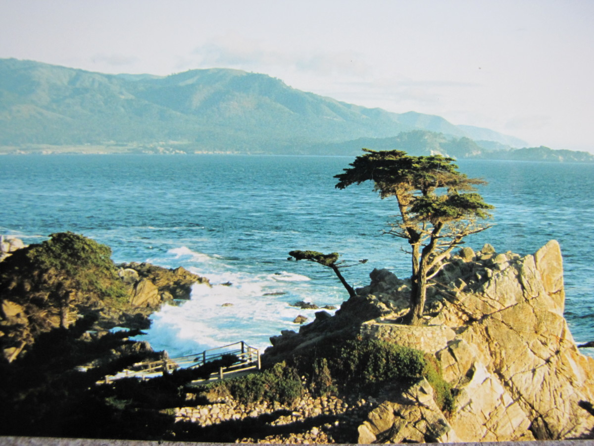 The Lone Cyprus - 17 Mile Drive.