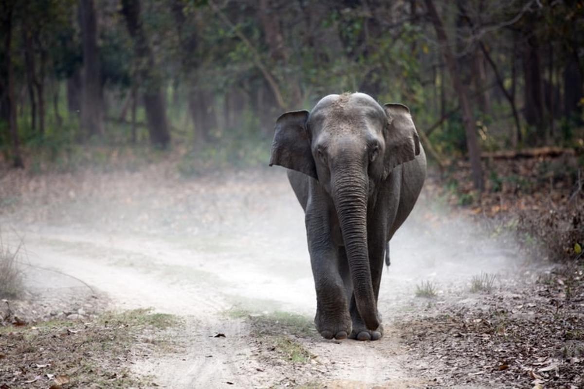 Asian Elephant in Corbett