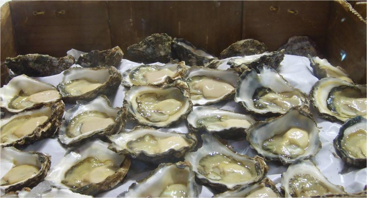 Oysters- Talaba