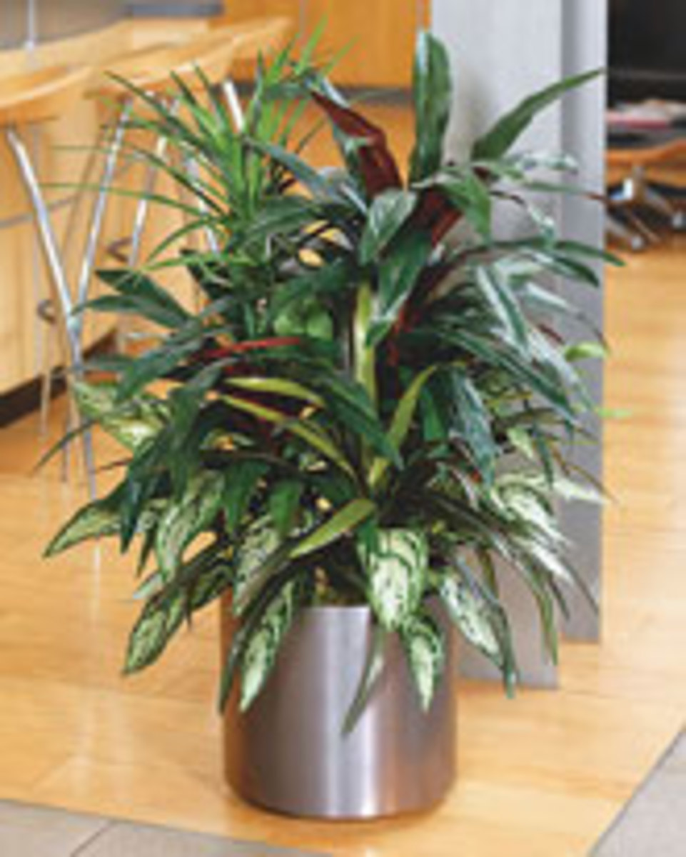 Artificial silk plants are practically indistinguishable from the real thing