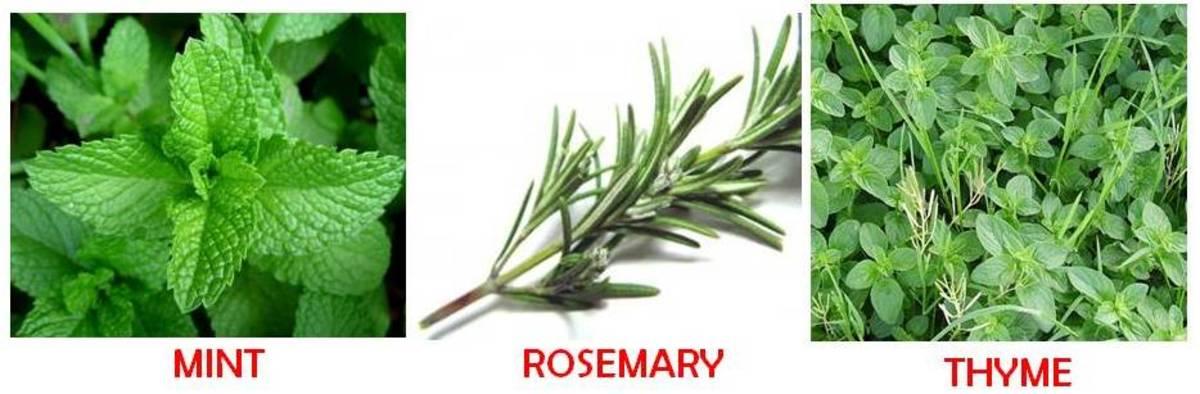 culinary-herbs-list