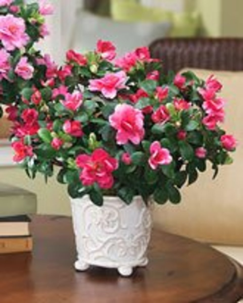 Artificial silk plants and silk flowers act as the focal point for your interior decor