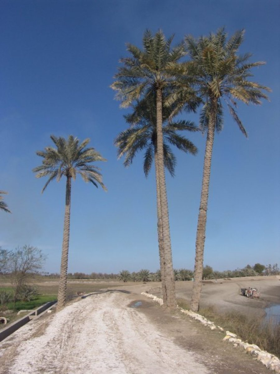 Khairpur is famous for Mirs' state as well as dates?(Khajoor)