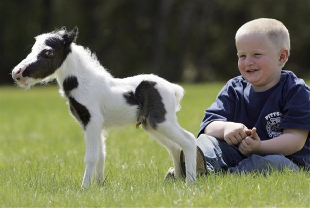 World's Smallest Horse - At Just Six Pounds! See the Video!