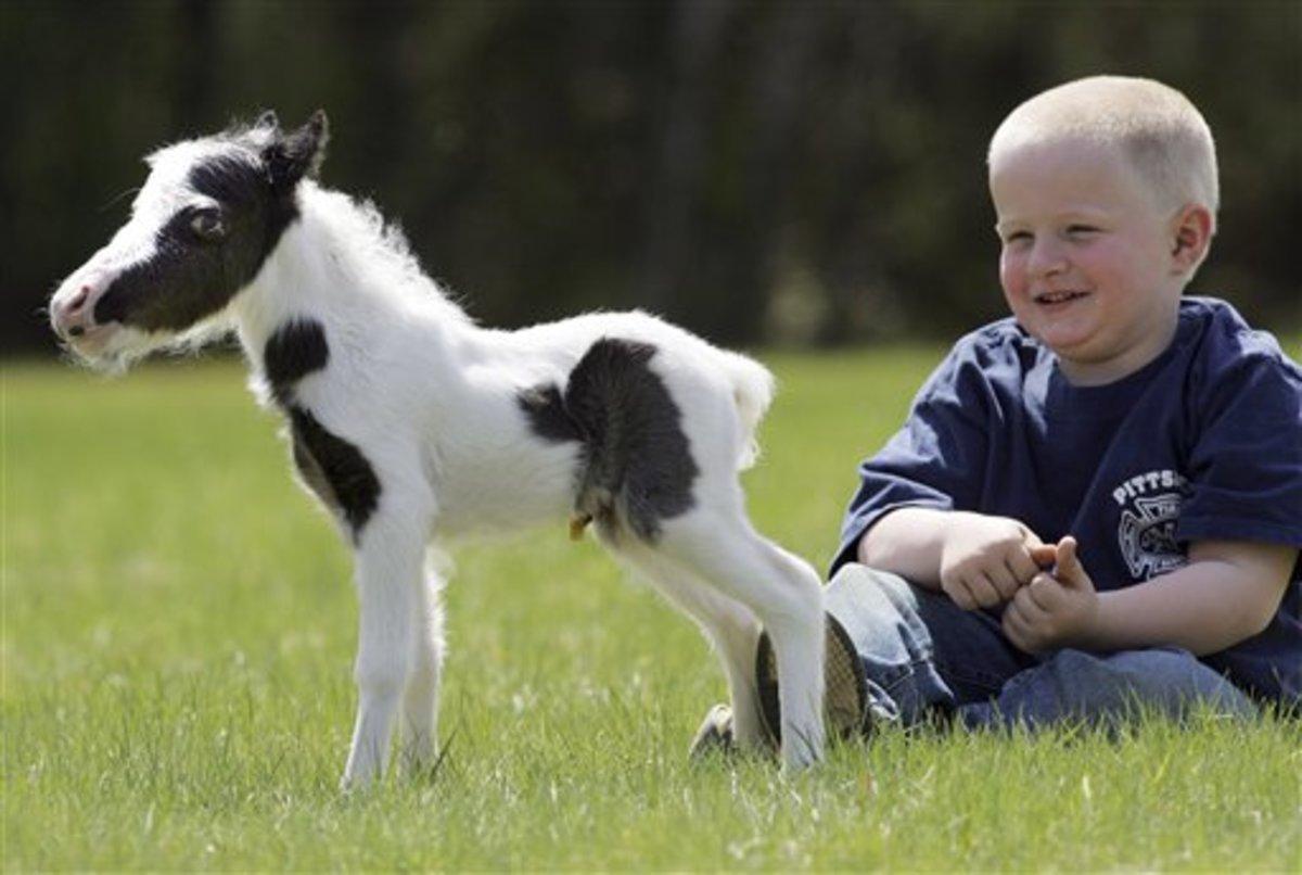 Einstein - the world's smallest horse?