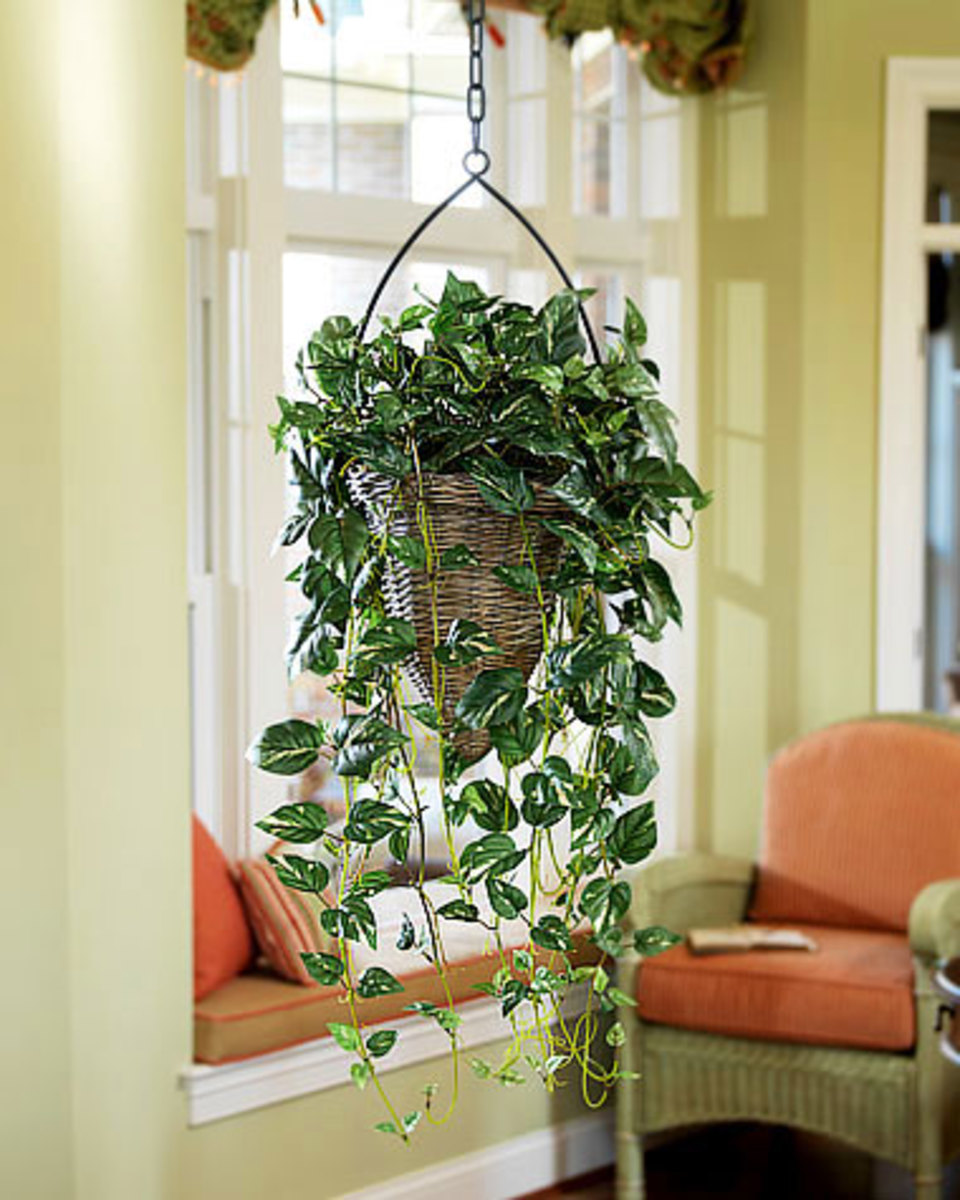 Hanging artificial plants are just one of the many styles of silk plant available