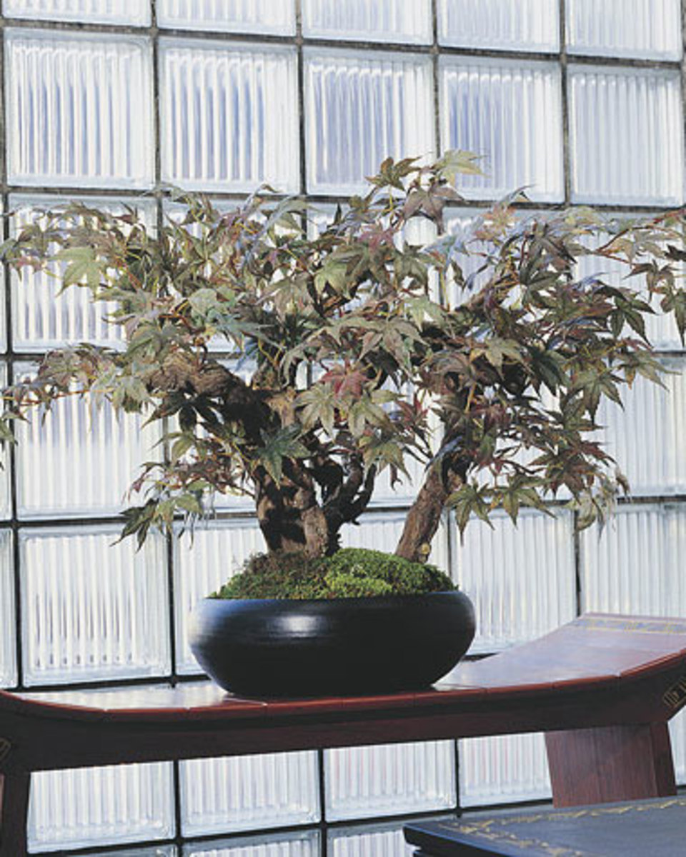 Even notoriously delicate bonsai tress are available as artificial silk plants