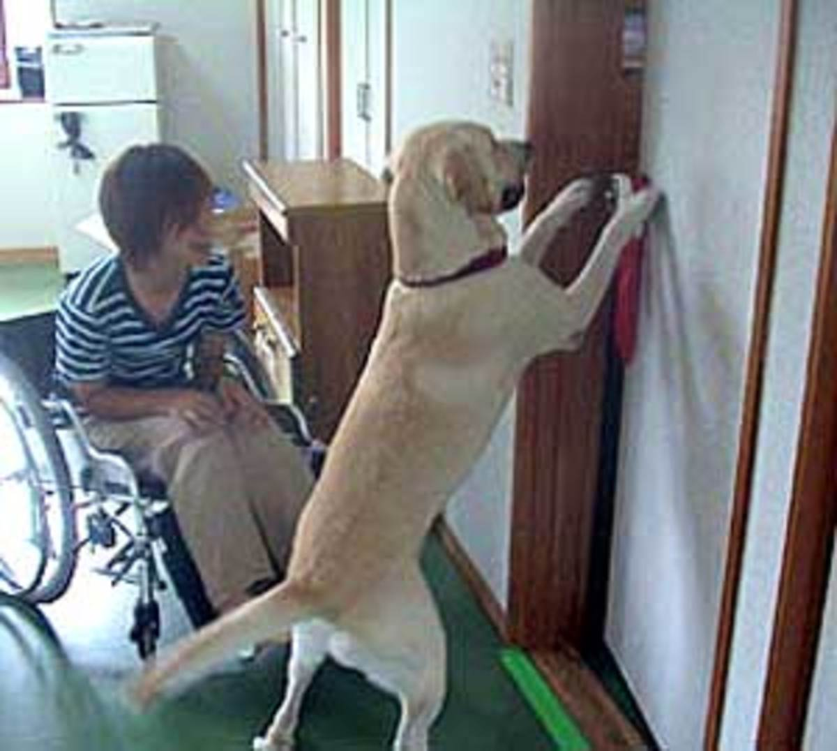 Assistance dog helps the student in Japan
