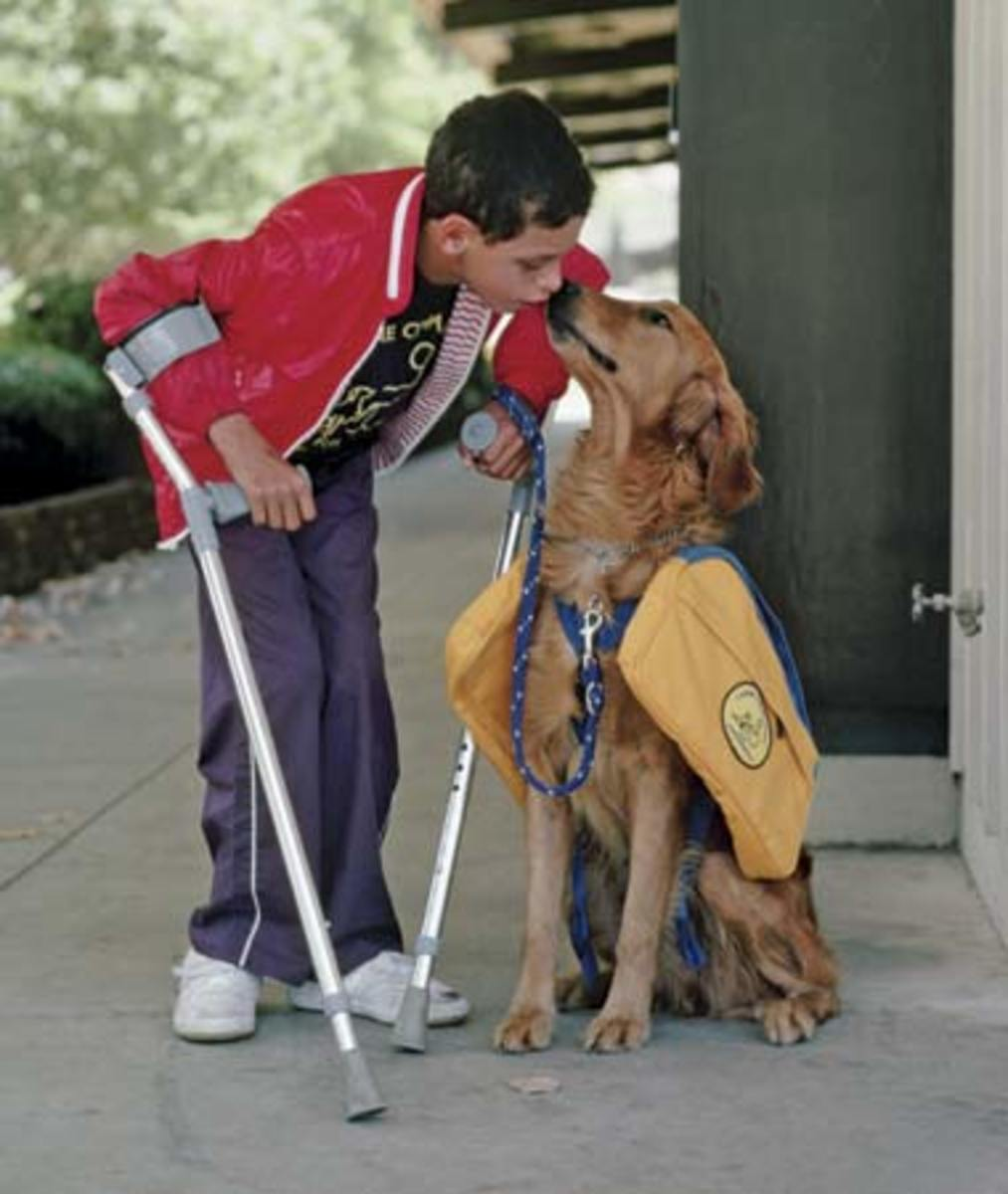 Assistance Dogs for Disabled