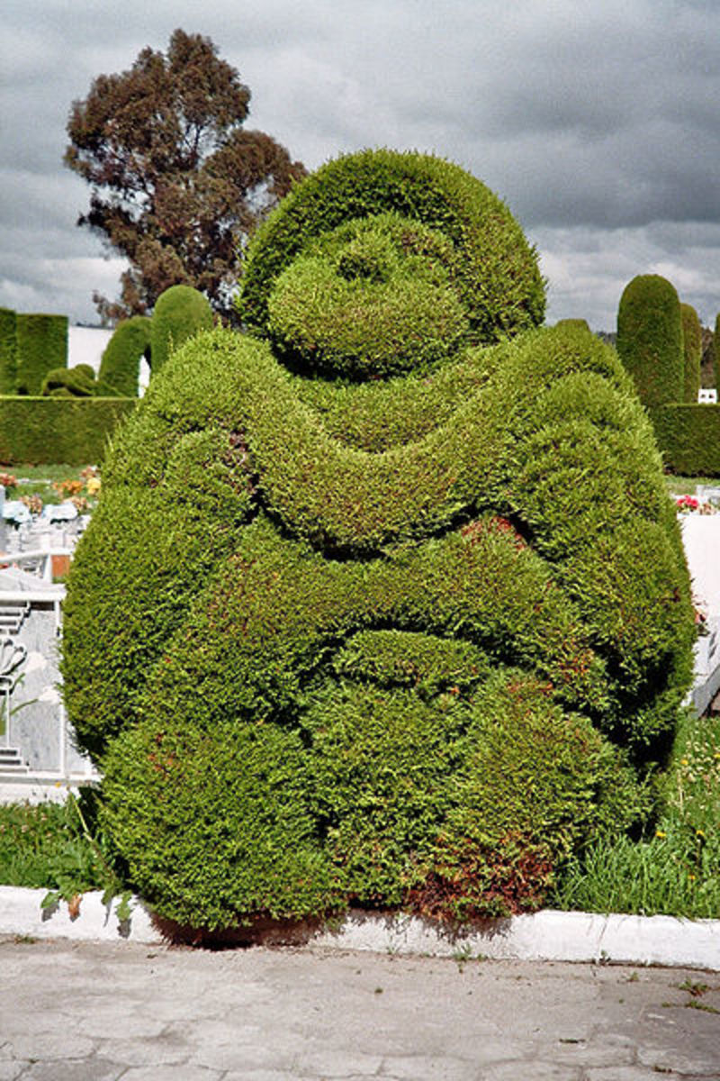 Topiary - How To Make It And Use The Frames