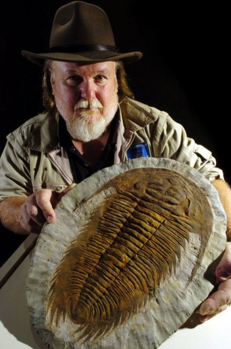LARGE TRILOBITE FOSSIL WITH PALEO JOE