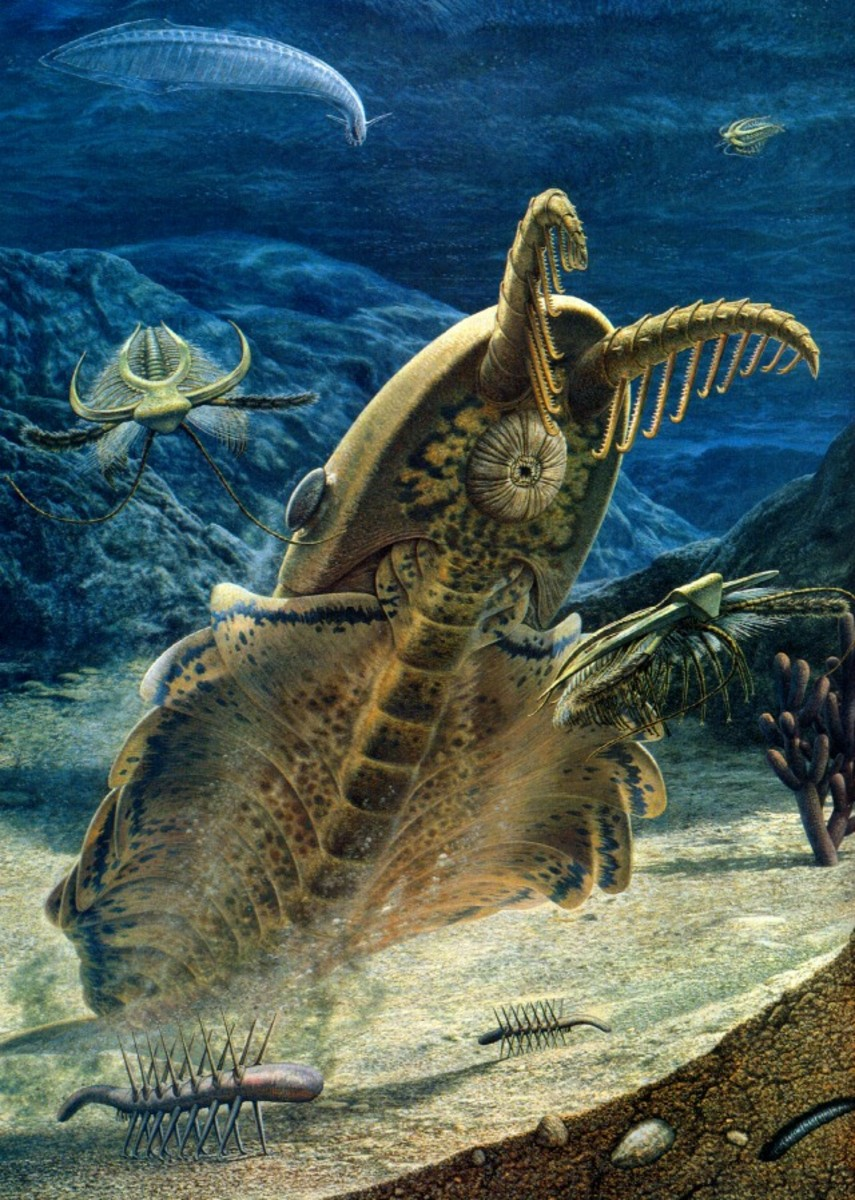 Earth's Earliest Gigantic and Bizarre Creatures