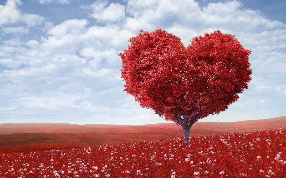 Why Love Is Beautiful? 8 Reasons to Prove That Love Is Special
