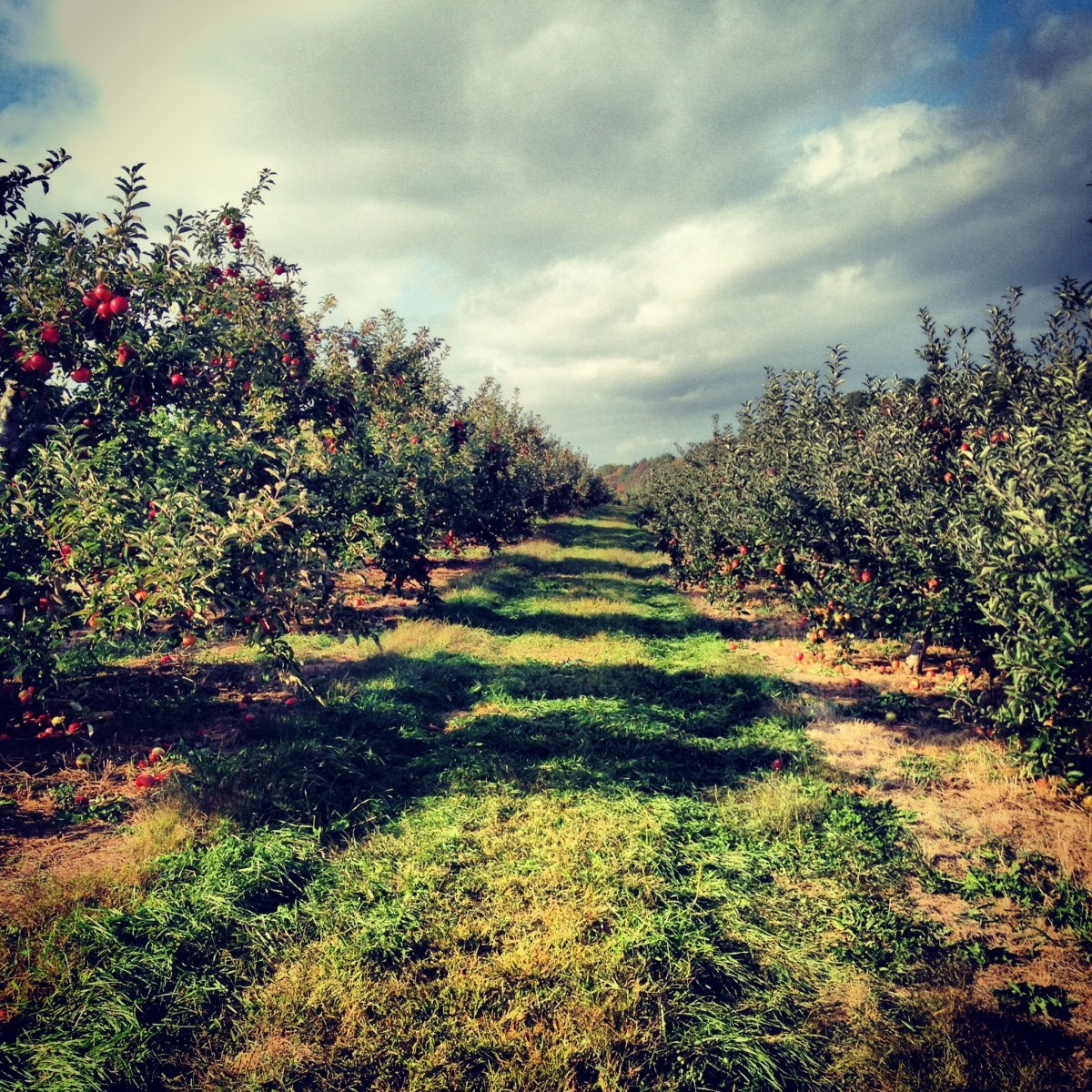 Bishop's Orchard October 2013