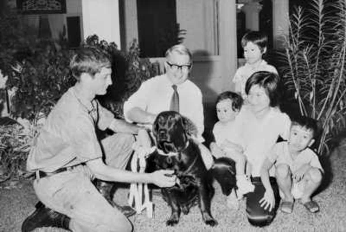 Saigon, South Vietnam. 17 November 1971. Mr R. Brash, the Counsellor and Consul General with the British Embassy in Saigon, and his Vietnamese maid and her three children, are introduced to Marcian, by his former handler, Private David Nelson.