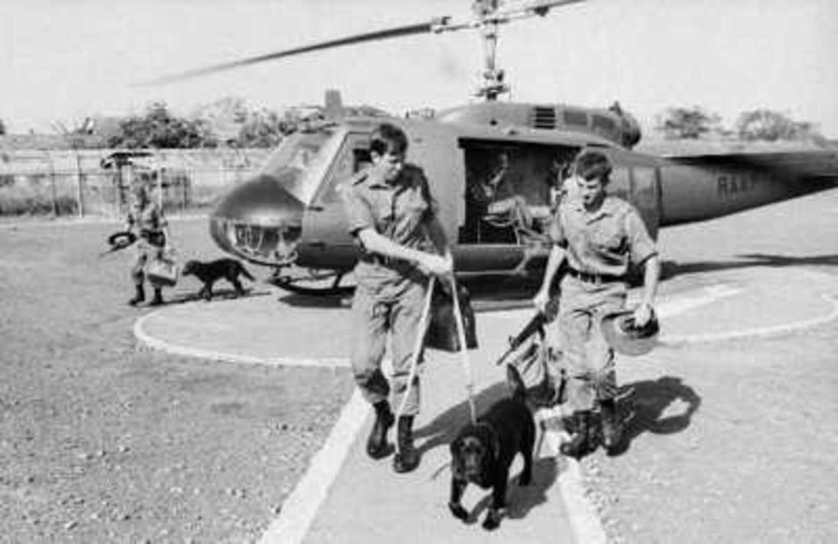 Saigon, South Vietnam, 17 November 1971. Arriving by helicopter to meet their new owners are tracker dogs Marcian and Milo. Marcian was handed over to his new owner, Mr R. Brash, the Counsellor and Consul General with the British Embassy in Saigon.