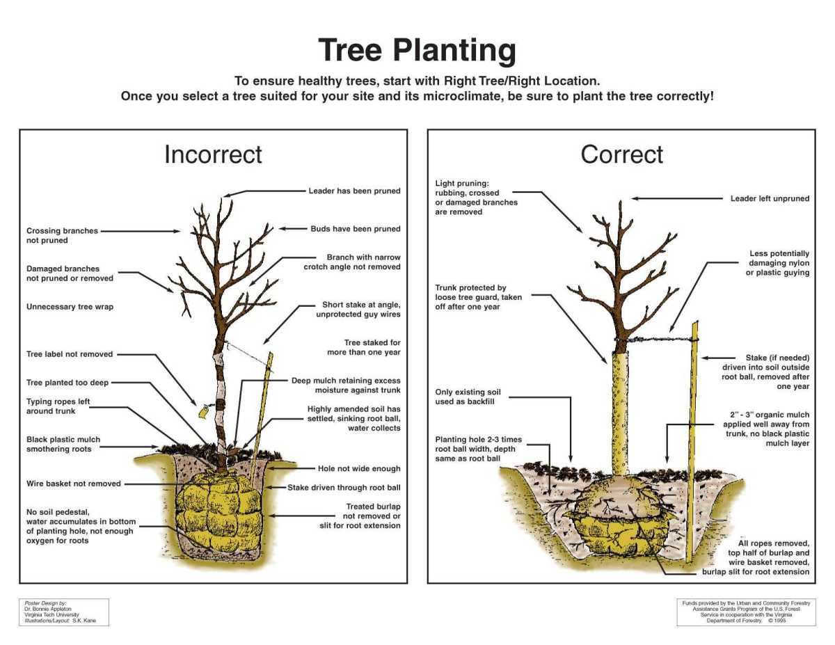Correct and incorrect way to plant trees