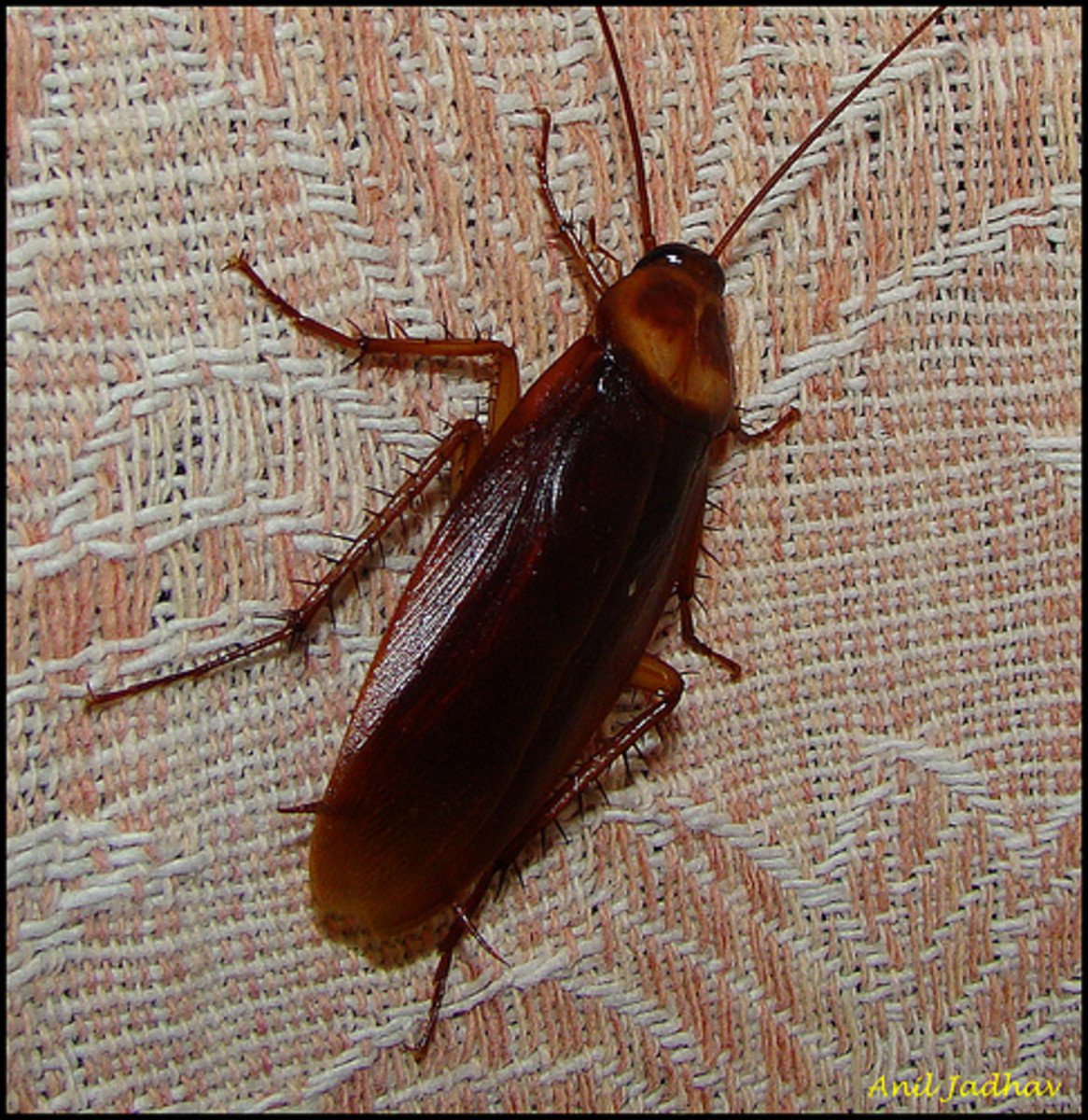 naturally-keep-pests-out-of-your-home