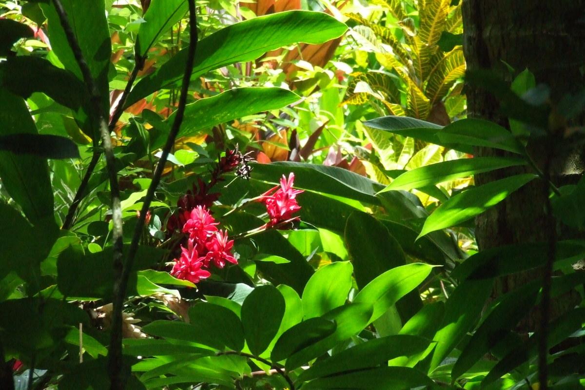 St Lucia flower