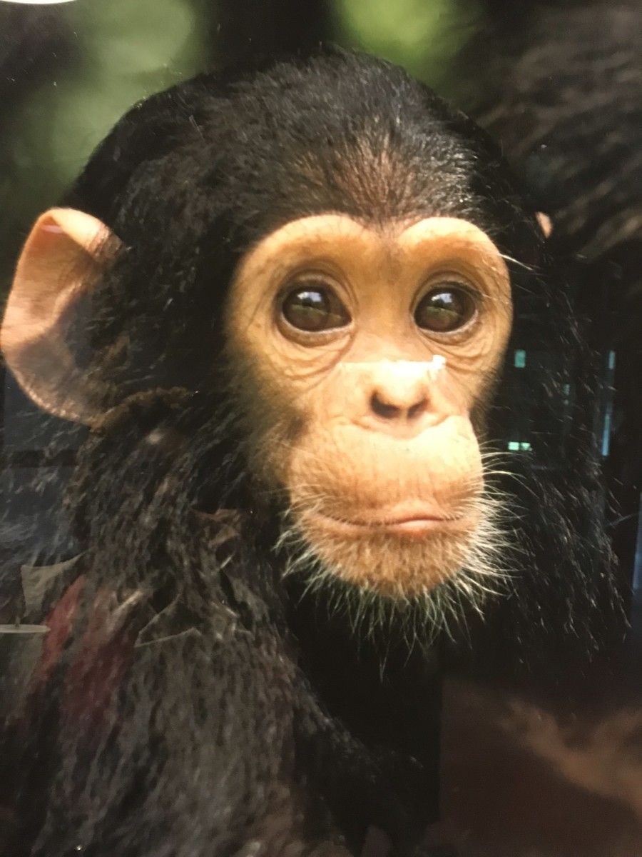 The Cutest Creatures at the Philadelphia and Melbourne Zoos