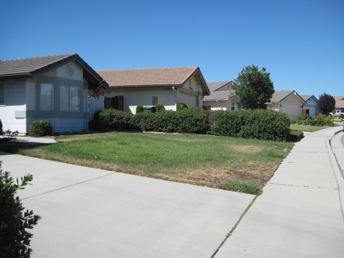 This is how one lawn looked in the middle of summer when water was being rationed in Paso Robles in 2011. Many lawns were almost completely brown.