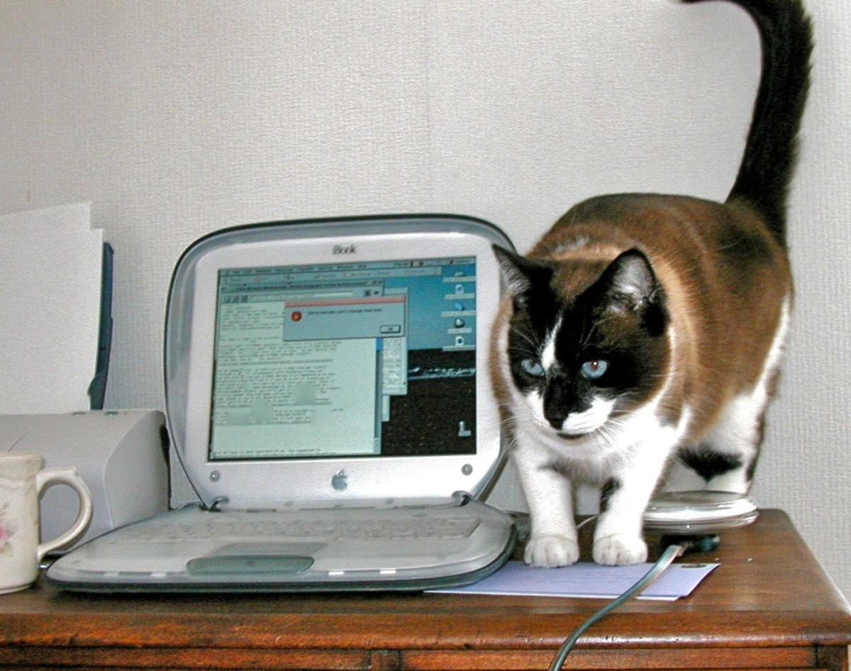 Gemini checking out my old laptop.