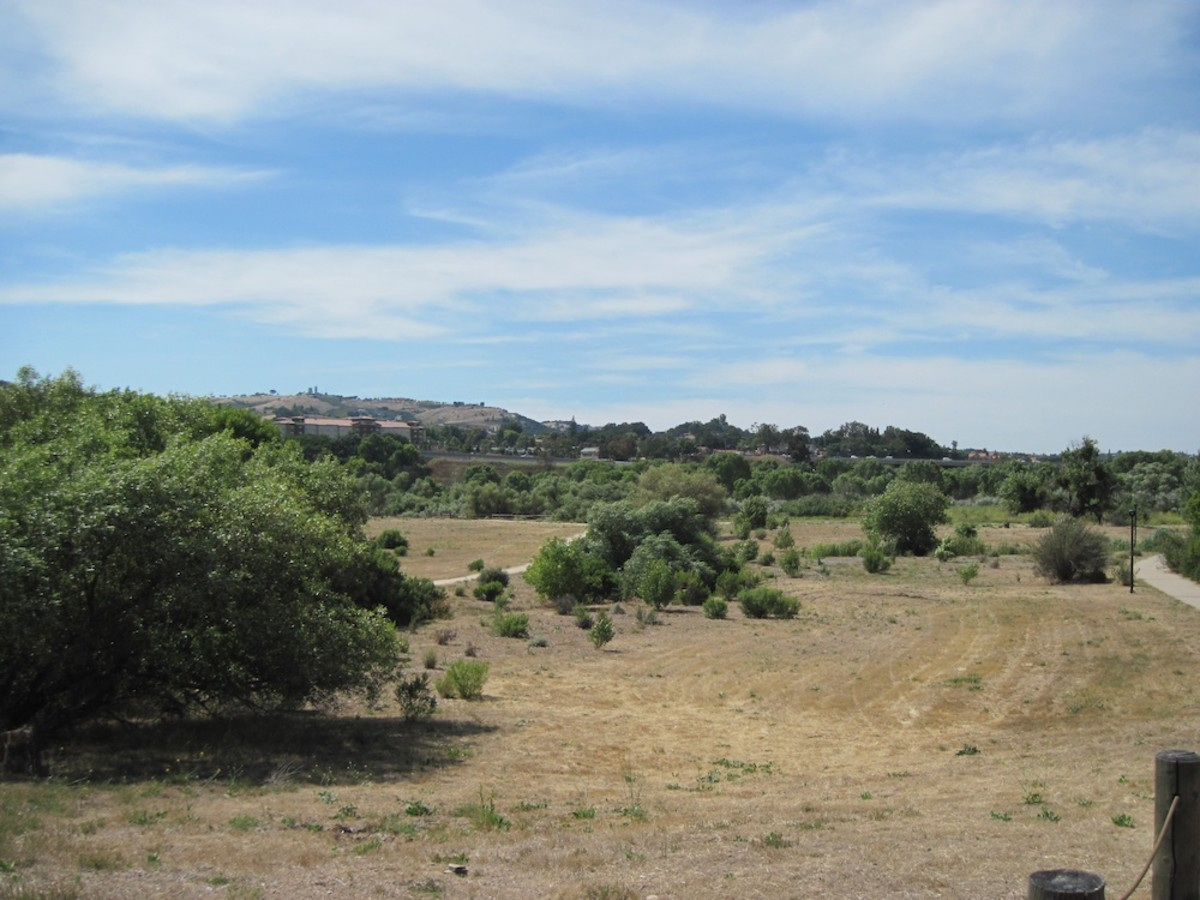 Grasslands at Lawrence Moore Park in Paso Robles on June 19, about two months after the last rains.