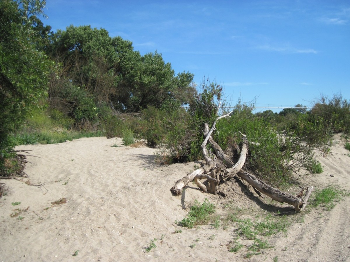 The Salinas riverbed is almost entirely dry two months after the last rain. This picture was taken on June 19, 2011.