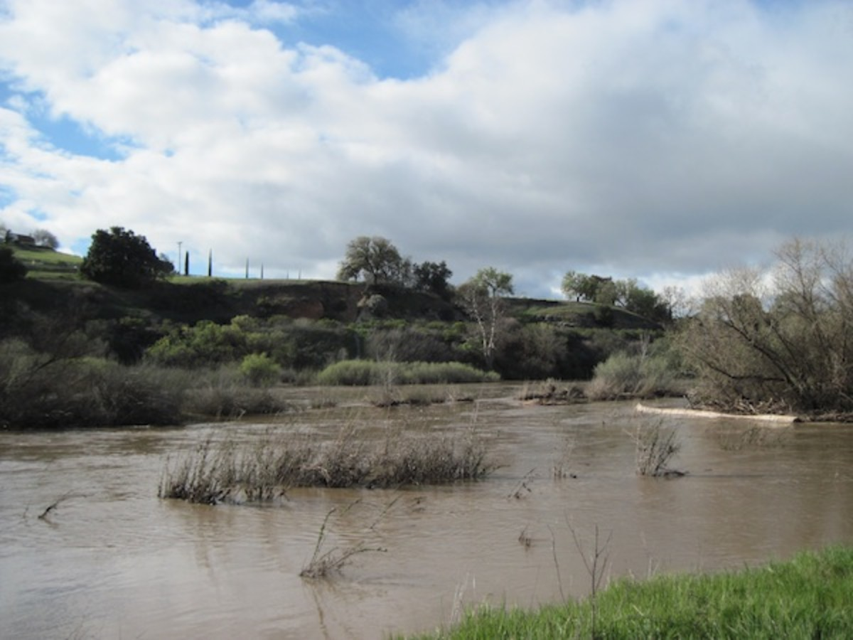 When the rains have fallen, the river flows again, flooding the small plants growing in the river bed and surrounding what are now islands again.