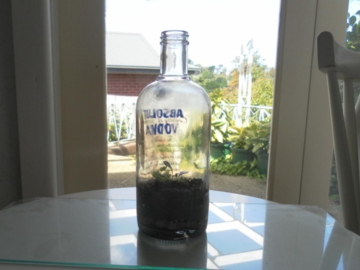 plant-in-a-bottle