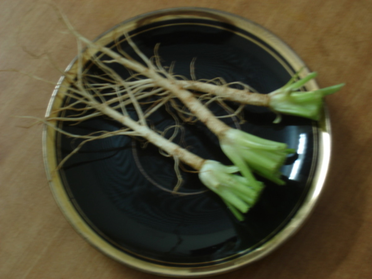 Roots after separating from leaves and cleaning thoroughly