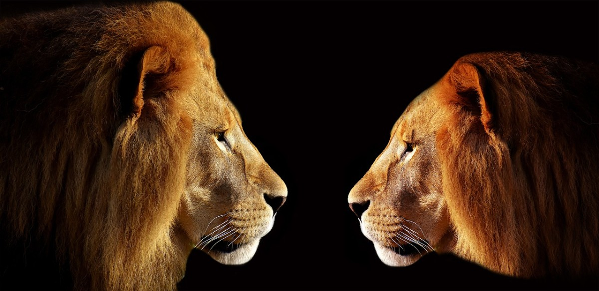 the-lion-king-of-the-jungle