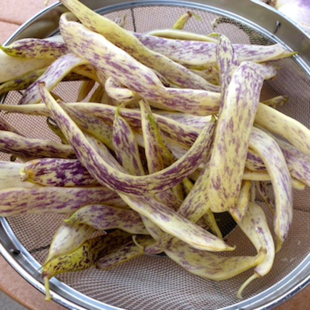 Good as a stringless snap bean or a light brown dried bean with dark speckles.