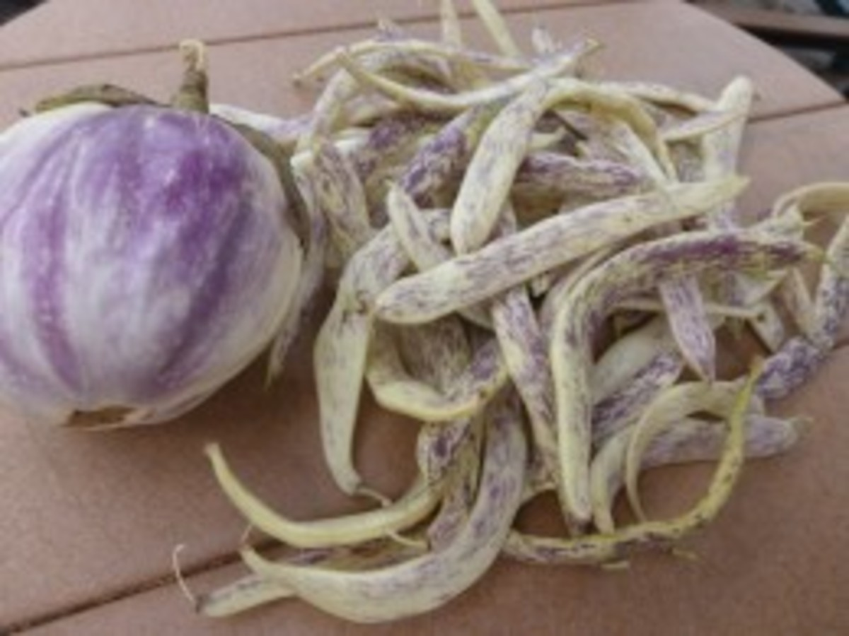 Choose eggplants when small. Pick beans when they turn ivory.