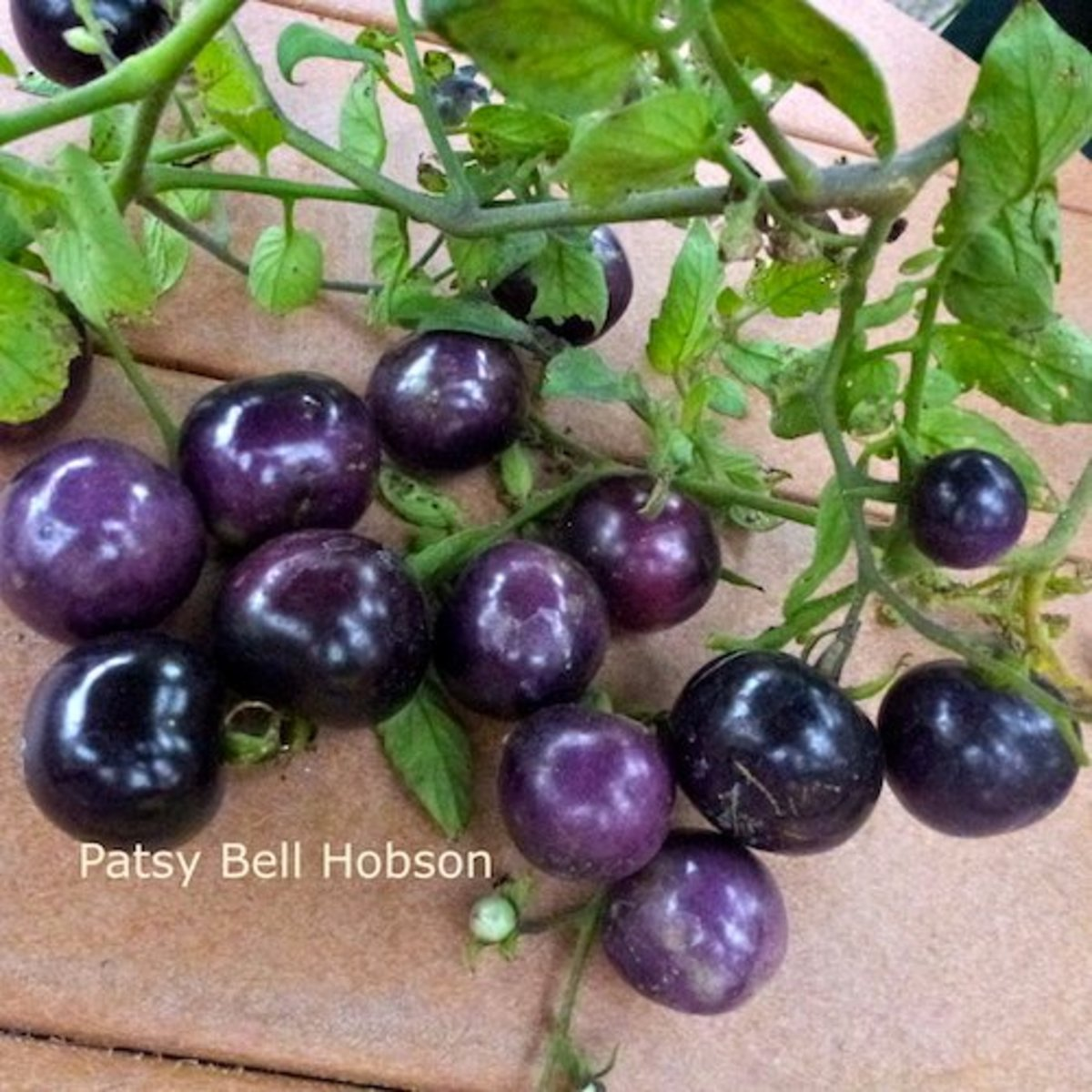 Eat Indigo Rose  Blue Tomatoes