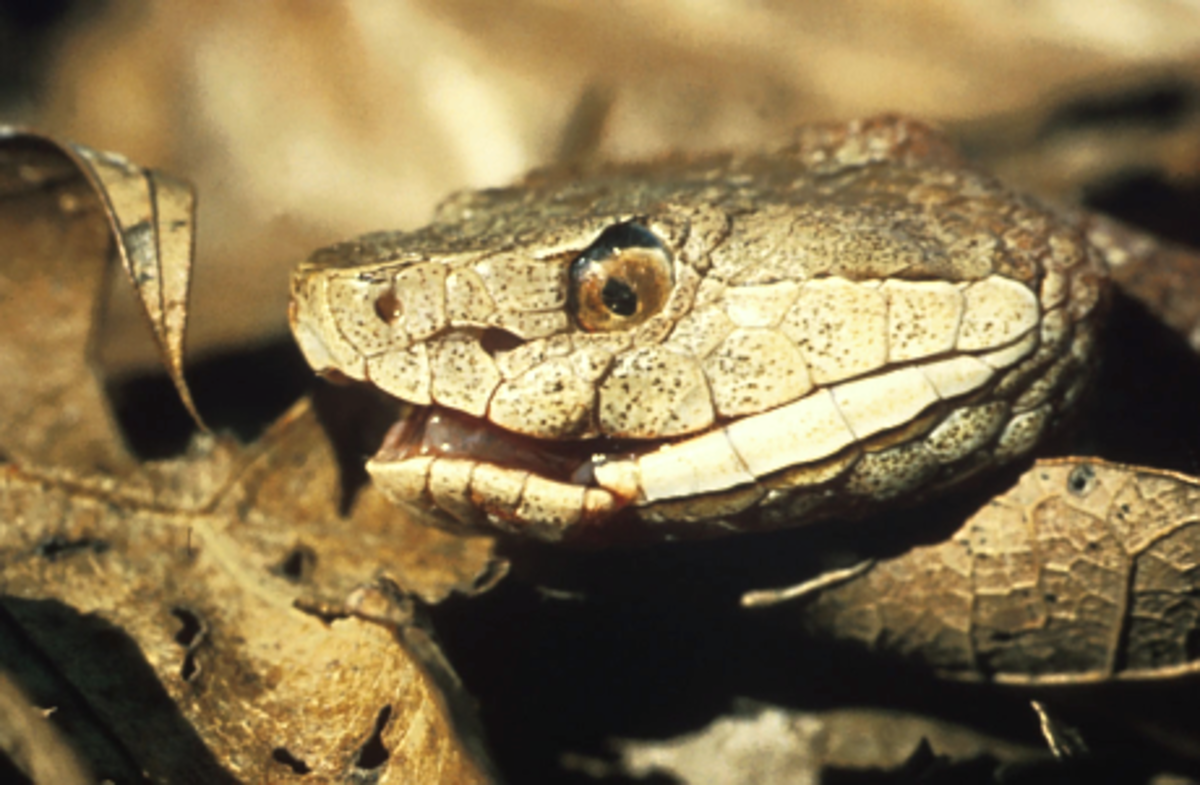 is-this-snake-venomous