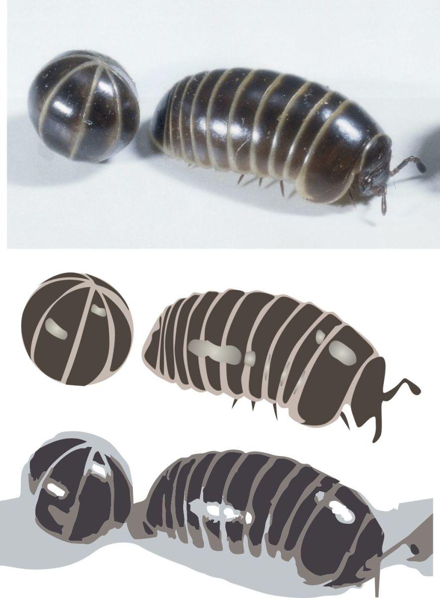pill bug jpg, hand render, computer trace render