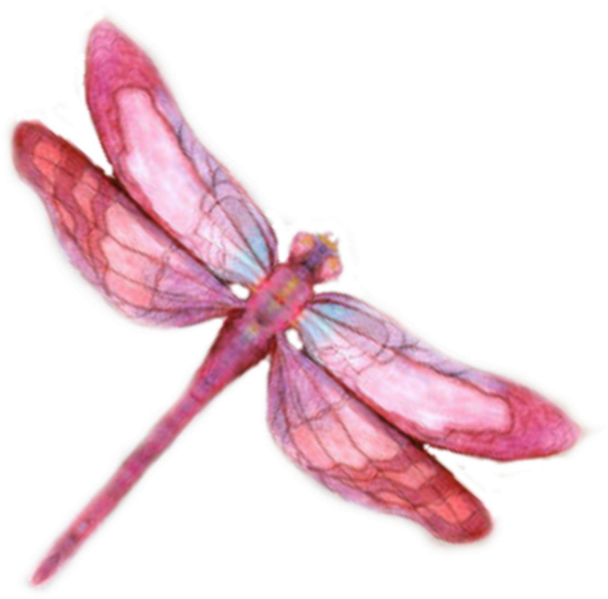 Our Fasination With Pretty Bugs - art inspired by the dragonfly and other insects