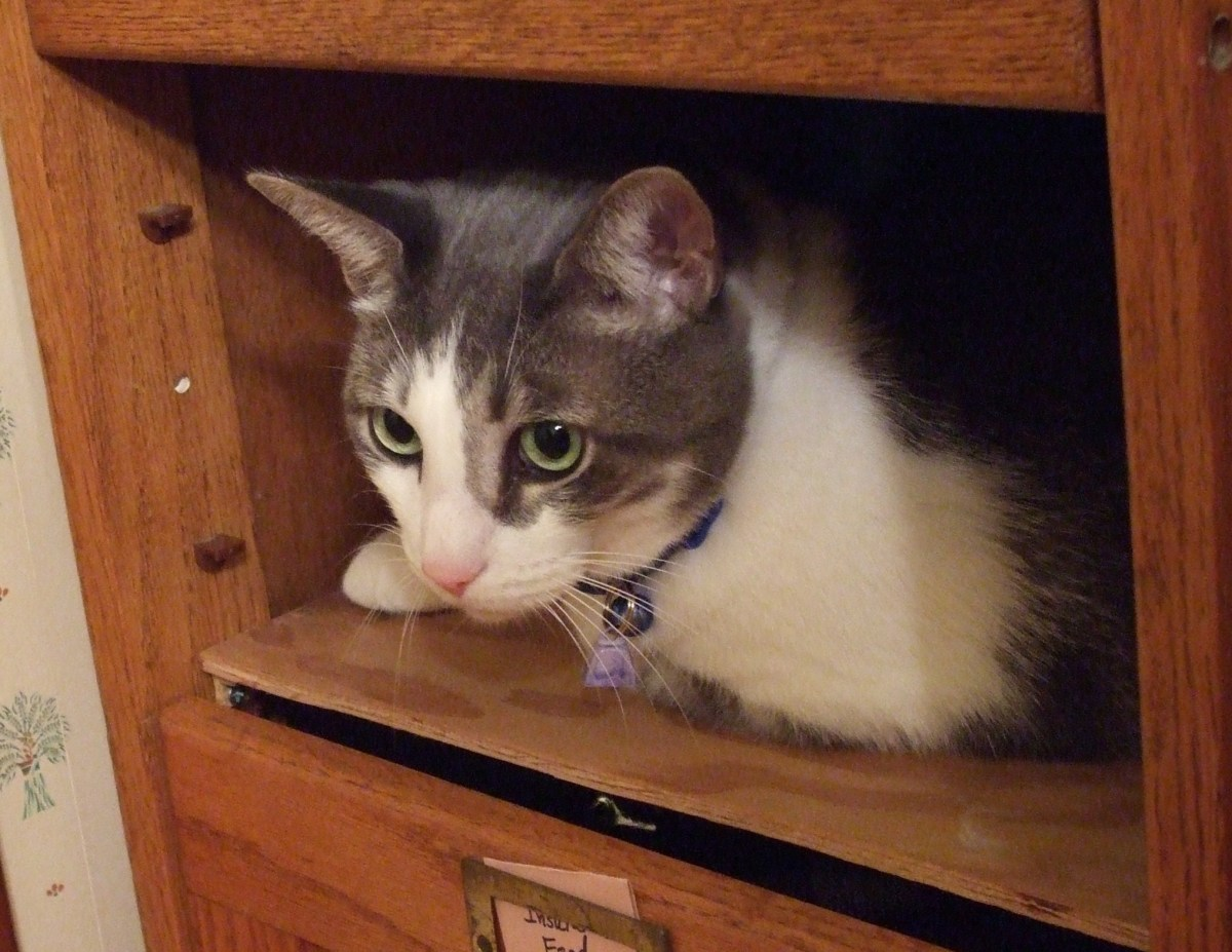 Sammy surveys the room from a small shelf.